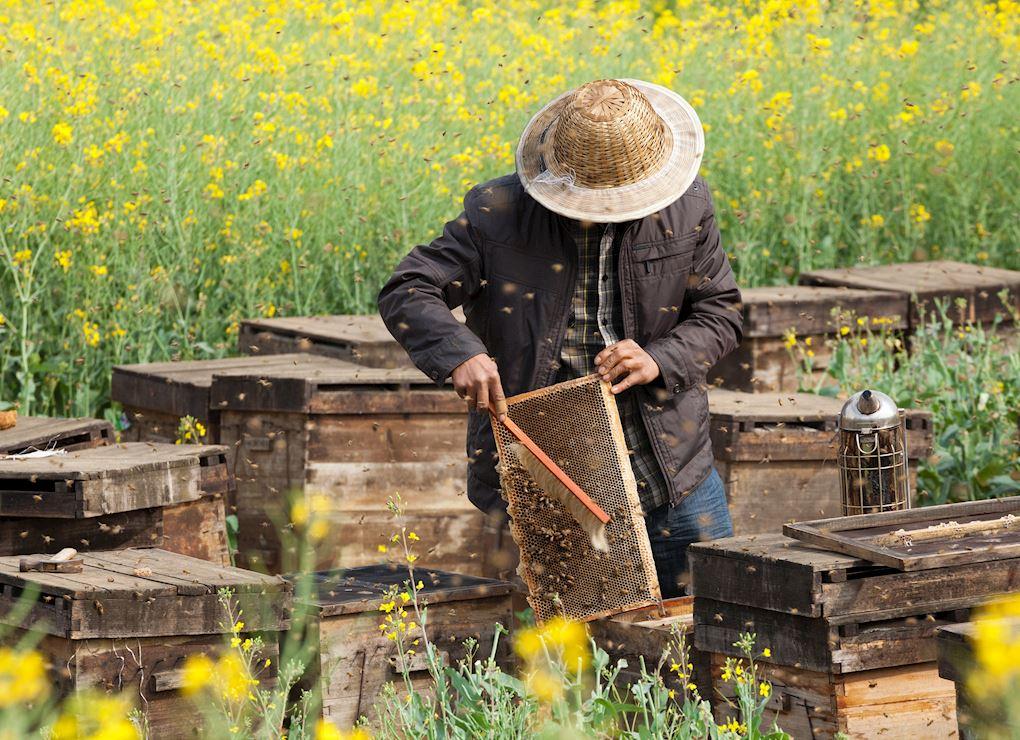Ferme apicole