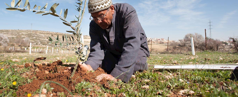 olivier en palestine