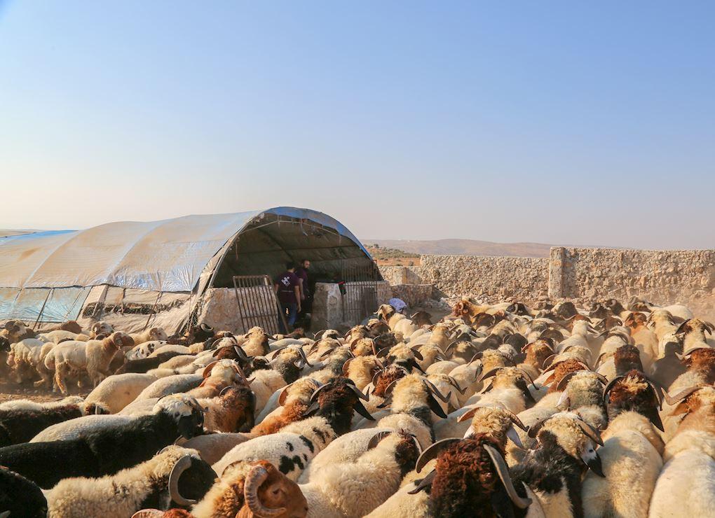 Sacrifice au Maroc - Mouton