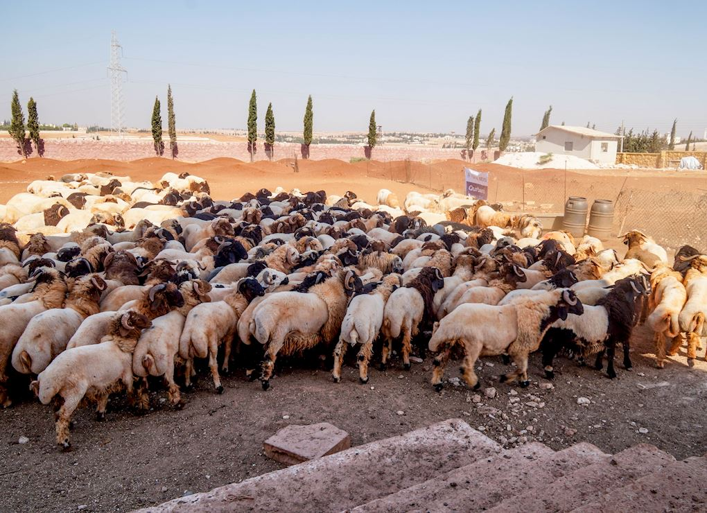 Sacrifices ou dons alimentaires - Syrie