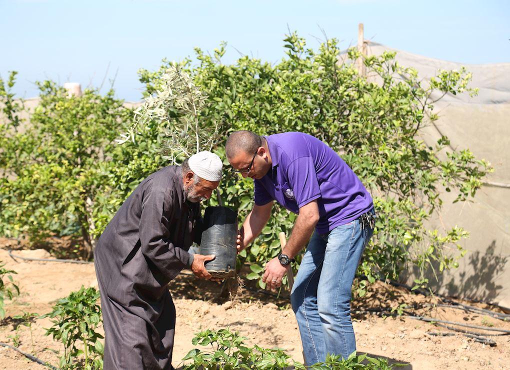 Offrir un olivier en Palestine