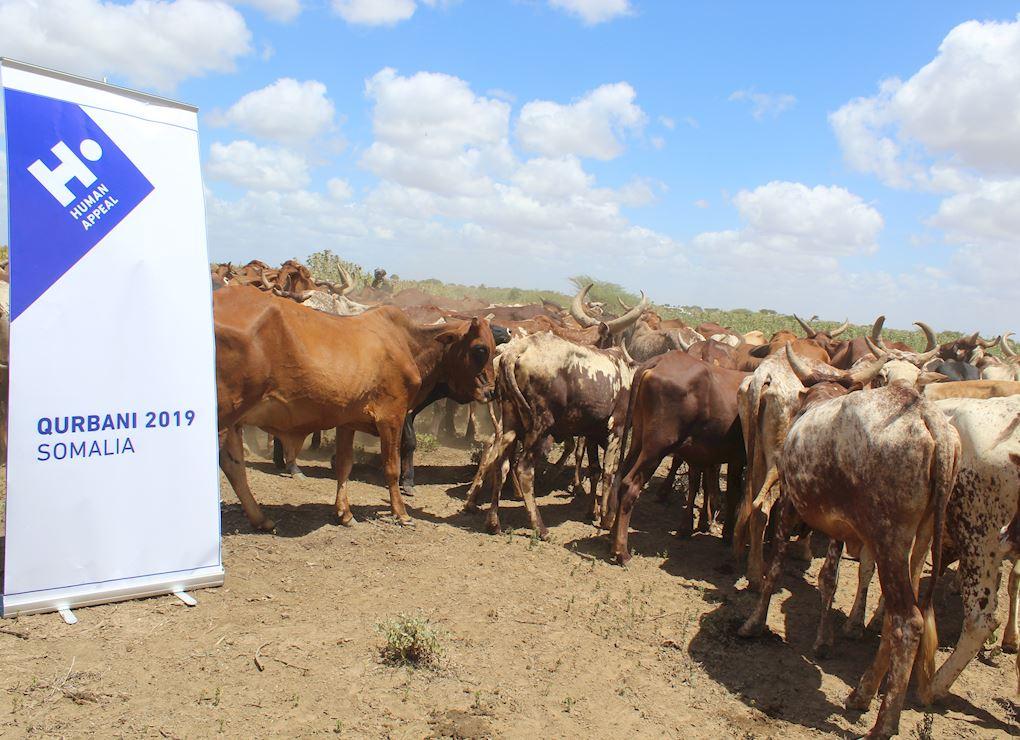 Sacrifice en Somalie - Part de Boeuf