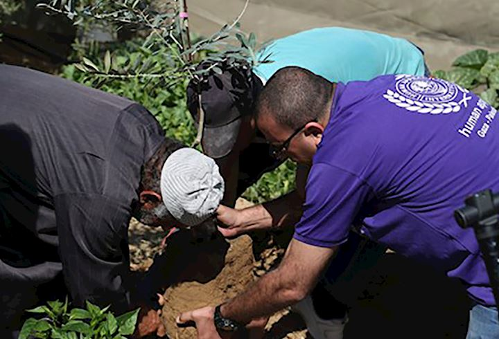 planting a olive tree in Palestine